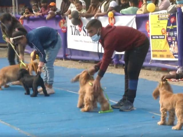 Video : Bengal's Siliguri Hosts Dog Show, Draws Huge Crowd