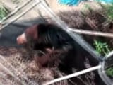 Video : Wild Bear Rescued From Abandoned Well In Odisha