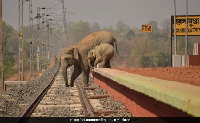 हथिनी और उसके बच्चे पहुंचे रेलवे स्टेशन, करने लगे पटरियां पार, बॉलीवुड एक्ट्रेस ने जताया दुख