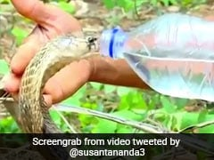 Cobra Drinks Water From Bottle In Viral Video