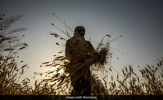 World Food Prices Fall In June For First Time In A Year: UN Food Agency