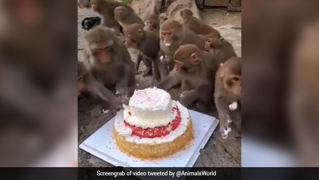 Monkeys Sharing A Huge Cake Is The Cutest 'Pawri Ho Rahi Hai' Viral Video