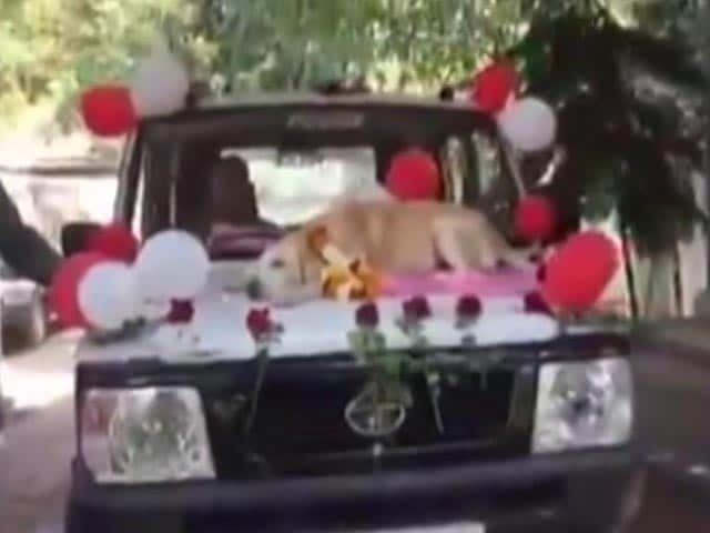 Video : Warm Farewell For Sniffer Dog In Nashik After 11 Years Of Service. Watch