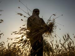 Cabinet Panel Nod To Fertiliser Subsidy To Benefit Farmers In Rabi Season