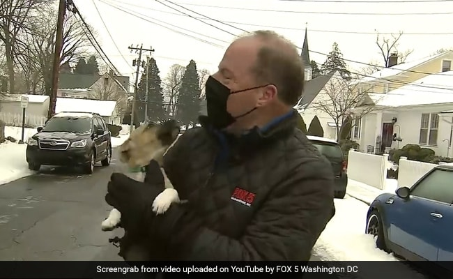 Puppy Crashes Weather Report On Live TV. Over A Million Views For Video