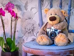 Teddy Day 2021: Quotes, Wishes, Greetings, Messages And Images For Teddy Bear Day
