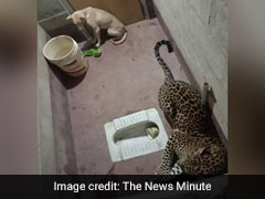 A Dog And A Leopard, Stuck In Toilet For Hours. How This Ended