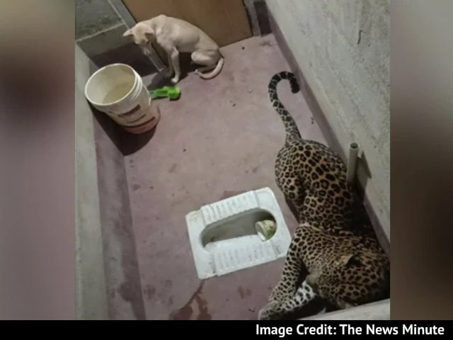 Video : A Dog And A Leopard, Stuck In Toilet For Hours. How This Ended