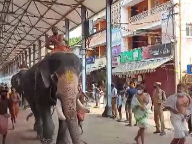 Video : Guruvayur Temple Festival Begins In Kerala With Elephant Race