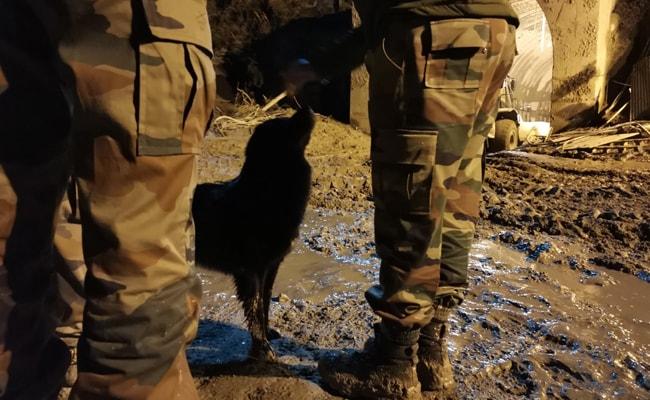 उत्तराखंड आपदा के बाद एक कुत्ता सुरंग के बाहर 3 दिन से कर रहा अपने मालिकों का इतंजार - देखें इमोशनल Video