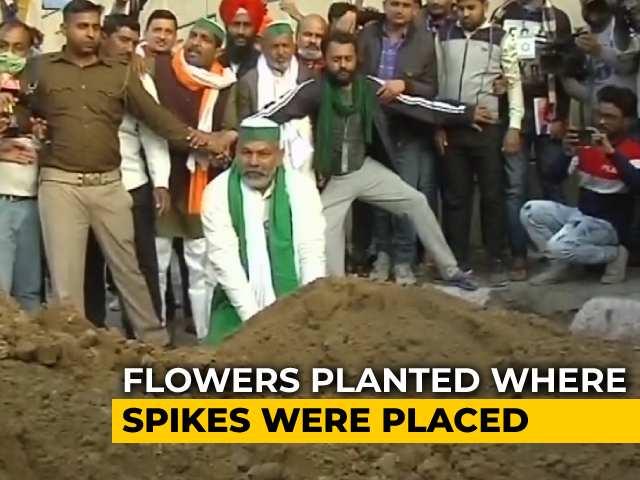 Video : After Spikes On Roads, Farmer Leader Rakesh Tikait's 'Flower' Diplomacy