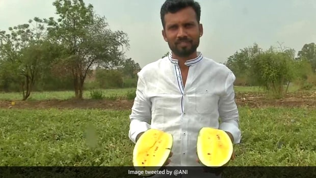 Karnataka Farmer Cultivates Yellow Watermelons, Here's How Twitter Reacted