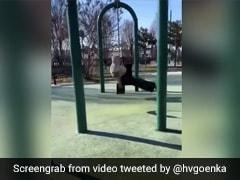 A Million Views For This Man's Swing Stunt. Harsh Goenka Shares Video