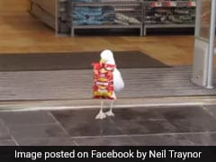 Funny Video Of Seagull Shoplifting Chips Will Leave You Shocked