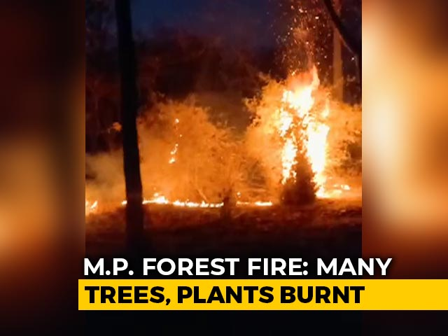 Video : Two Days On, Forest Fire Continues To Rage At Bandhavgarh National Park