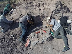 Fossils Of  Dinosaurs That Lived 140 Million Years Ago Found In Argentina