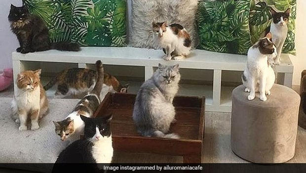 Dubai's First Cat Cafe Doubles Up As An Adoption Centre (See Pics)