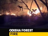 Video : Odisha Chief Minister Reviews Simlipal Forest Fire, Says No Damage To Big Trees