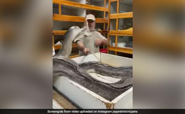 Huge Snake Attacks Zookeeper In Shocking Video