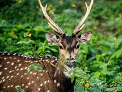 6 Arrested For Allegedly Poaching Spotted Deer In Chhattisgarh