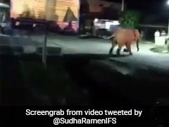 Video Of Huge Crowd Chasing Elephant Sparks Outrage