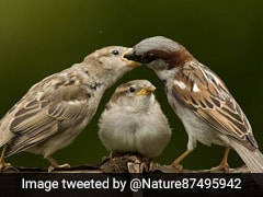 World Sparrow Day 2021: Here Are Sparrow Day Facts And How To Celebrate