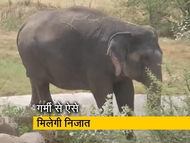 Video : हैदराबाद : नेहरू जूलॉजिकल पार्क में जानवरों के लिए विशेष व्यवस्था