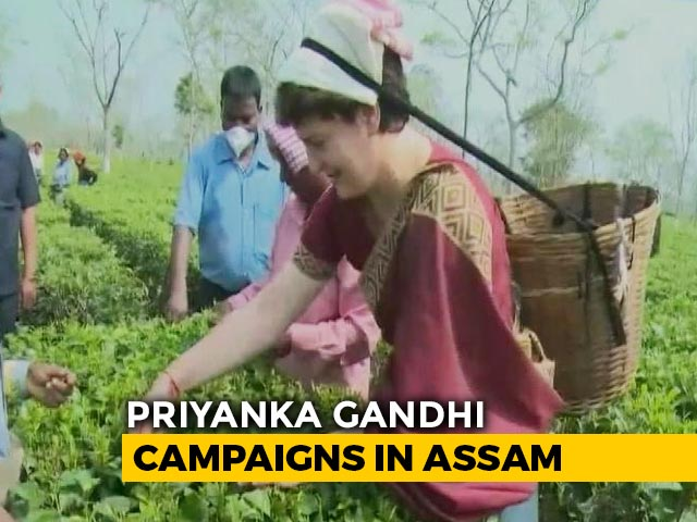 Video : Watch: Priyanka Gandhi Vadra Tries Hand At Plucking Tea Leaves In Assam