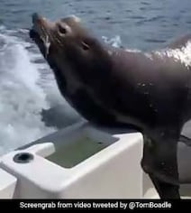 Close To 10 Million Views For Man's Unexpected Encounter With Sea Lion