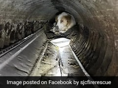 Firefighters Rescue Visually Impaired Dog Stuck In A Pipe