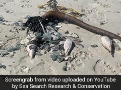 """Hundreds Of Sea Creatures """"Deadlier Than Cyanide"""" Found Washed Up On Beach"""