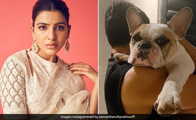 Samantha Ruth Prabhu's Adorable Pet Is The Comfort You Need When 'Life Gets Weird'