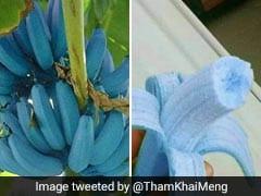 Ever Heard Of Blue Java Banana? It Tastes 'Just Like Vanilla Ice Cream' - Says Twitter User