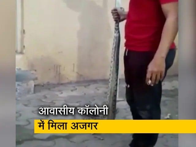 Videos : महाराष्ट्र के ठाणे में सात फुट लंबे अजगर को पकड़कर बचाया गया