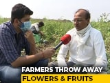 Video : Maharashtra Farmers Throw Away Fruit, Flowers As Prices Crash Amid Fresh Covid Curbs
