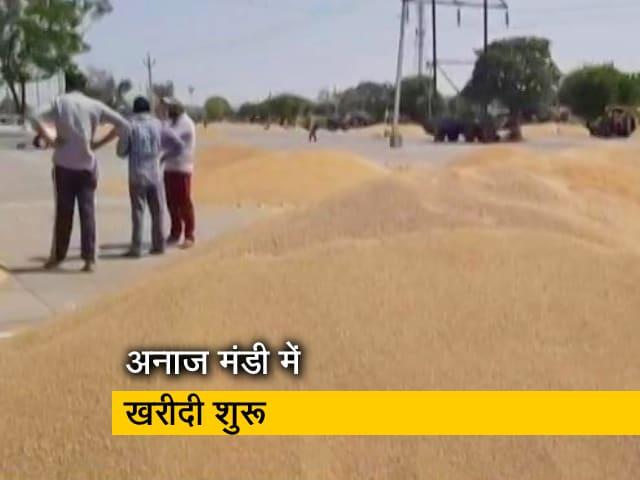 Videos : पंजाब में शुरू हुई फसलों की खरीदी, काम पर लौटे आढ़ती और कमीशन एजेंट