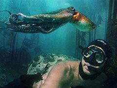 Oscars 2021: Netflix's <I>My Octopus Teacher</I> Wins Best Documentary Feature