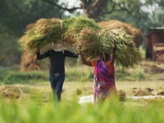 Video : United Nations Declares 2023 As The International Year Of Millets