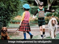 ICYMI: What Rahul Gandhi And Others Shared On Pet Day