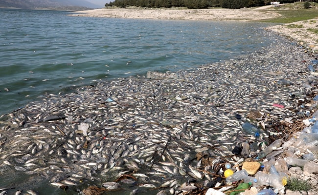 At Least 40 Tonnes Of Dead Fish Wash Up On Shore Of Polluted Lake In Lebanon