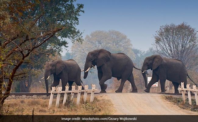 Environmental Organisation Seeks Probe Into 18 Elephant Deaths In Assam