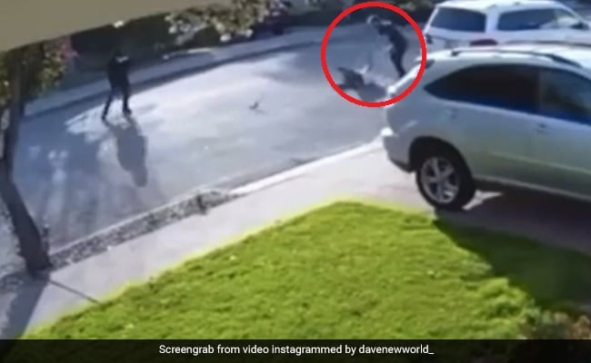 Male Body Slam Robber Who Holded Him At Gunpoint