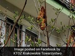 घर से बाहर निकली महिला को पेड़ पर बैठा दिखा 'बिना सिर का जानवर', पास जाकर देखा तो...