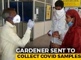 Video : Gardener Collects Covid Sample, Madhya Pradesh Health Minister Campaigns