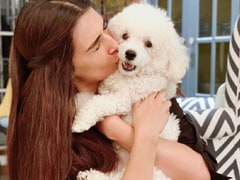 Kriti Sanon To Priyanka Chopra, These Stars Have The 'Fur'fect Company