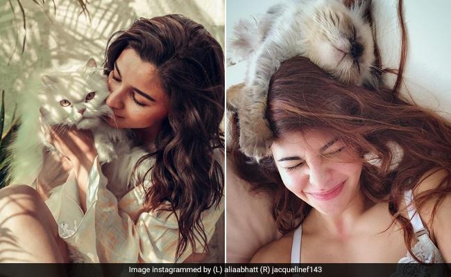 Alia Bhatt To Jacqueline Fernandez: Celebs Who Love Cats