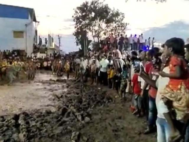 Video : Hundreds Participate In Ugadi Cow Dung Fight In Andhra Amid Covid Surge