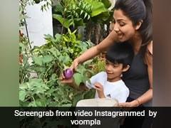 Shilpa Shetty ने बेटे संग गमले से तोड़ निकाले एक किलो बैंगन, बोलीं- आज भरता बनेगा...देखें Video