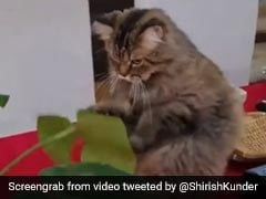 शिरीष कुंदेर ने शेयर किया 'बॉक्सर बिल्ली' का Video तो फरहान अख्तर का यूं आया रिएक्शन