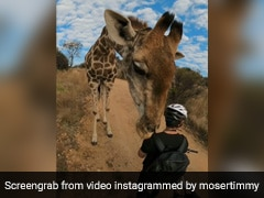 Curious Giraffe Stops Mountain Biker For A Sniff. 10 Million Views For Video